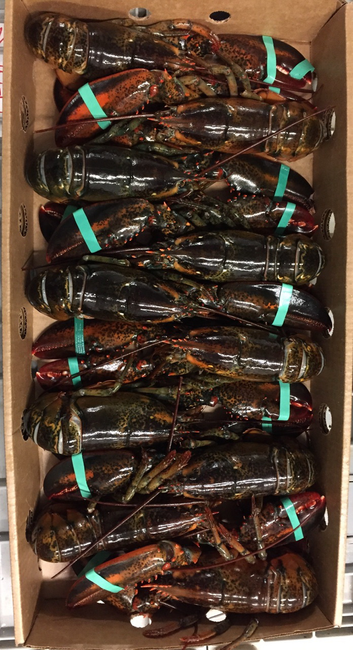 Chix Lobsters